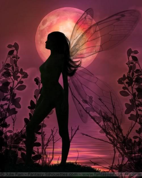 fairy-24