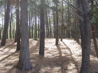 bosque_mar_de_las_pampas